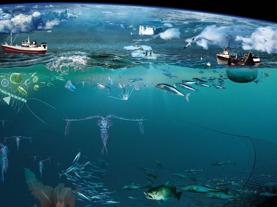 imagem de pesca ilegal