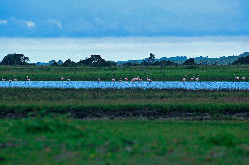 imagem do Parque nacional da Lagoa do Peixe
