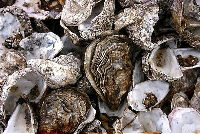 imagem de ostras