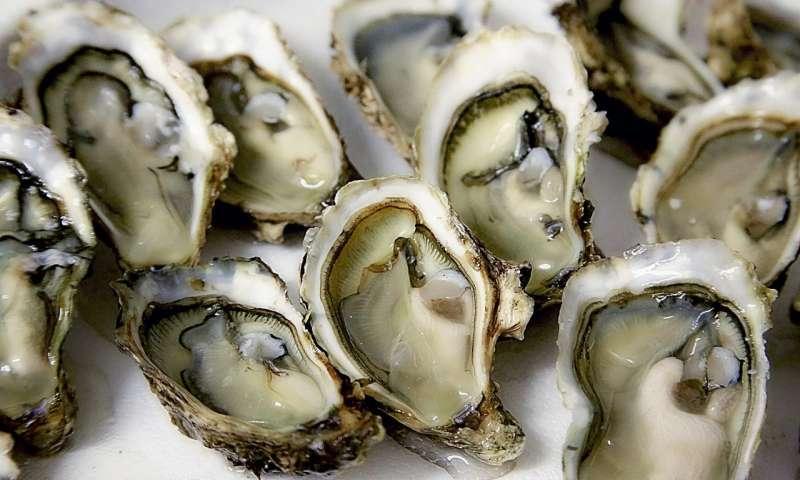 image de ostras