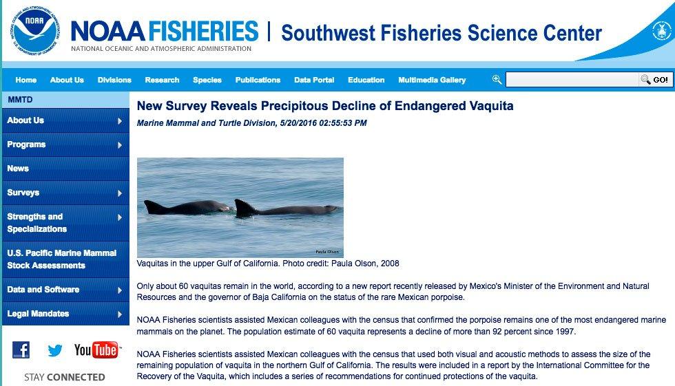 imagem do site da NOAA abriu uma página para a vaquita