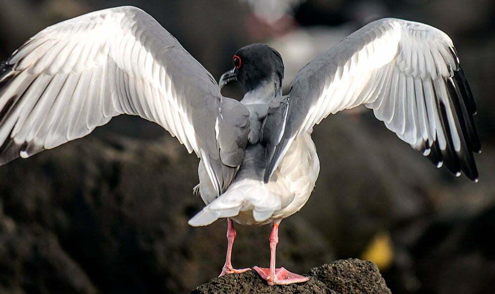 imagem de ave no arquipélago de Galápagos