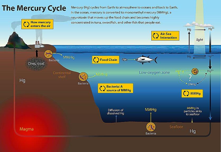 diagram do ciclo do mercúrio