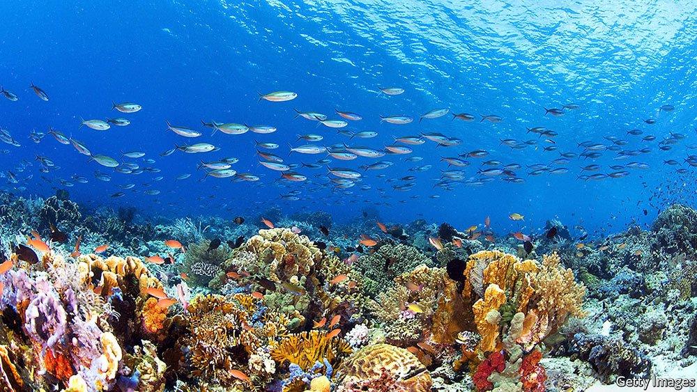 imagem de recifes de coral