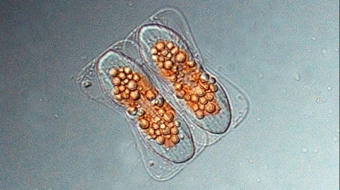 imagem e fitoplâncton