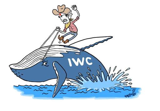 ilustração de caça a baleia e comissão baleeira internacional