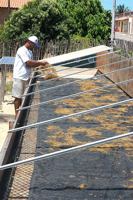 imagem de algas secando ao sol, Fleixeiras, CE