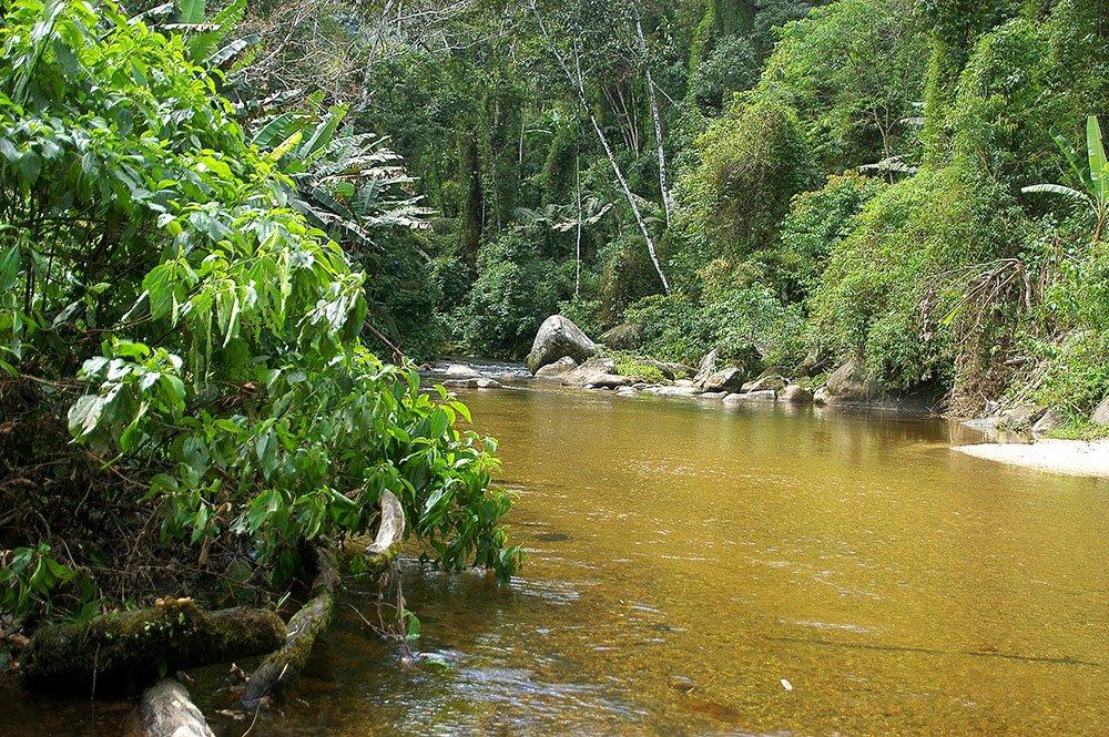 imagem de mata atlântica e rio da unidade de conservação.