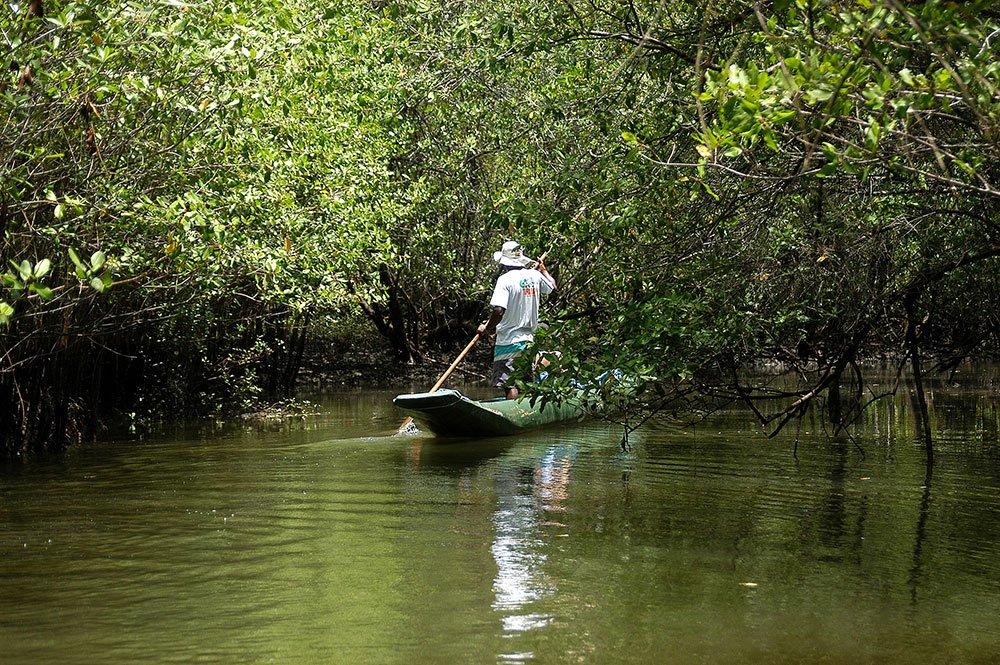 imagem de canoa no mangue