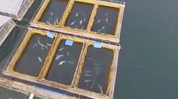 imagem de Baleias em cativeiro na Rússia
