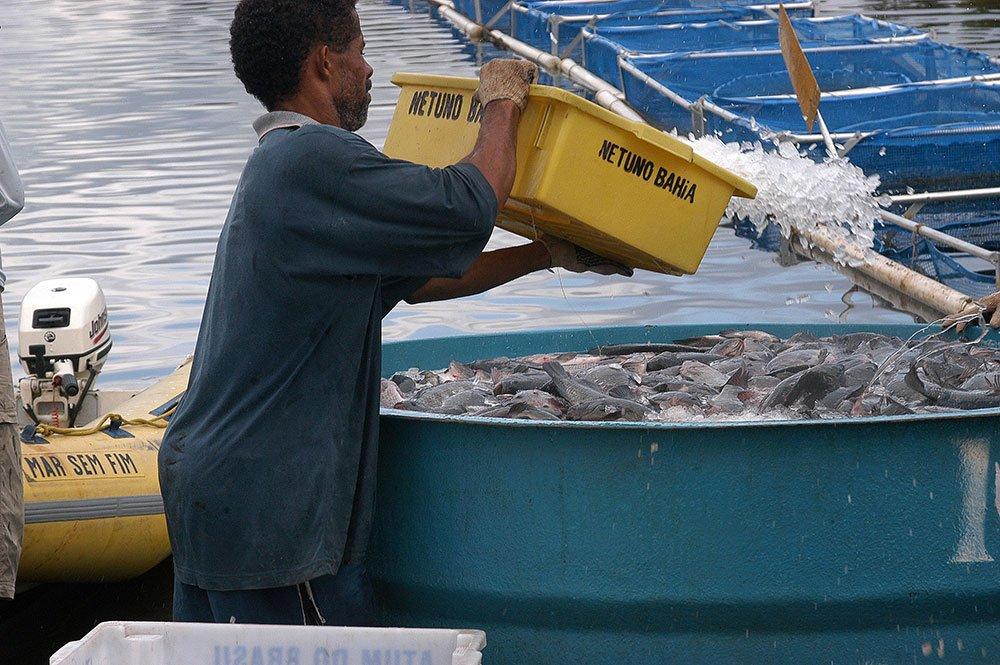 imagem de despesca de tilápia em rio da Bahia