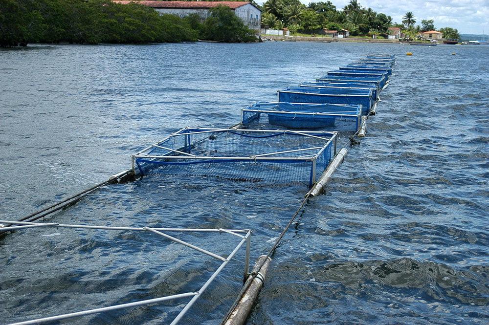 imagem de Gaiolas de criação de tilápias, rio Cairu.
