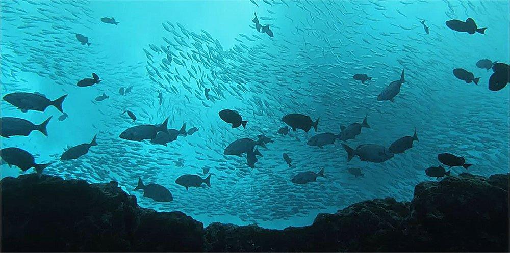 imagem submarina dos peixes da ilha de Trindade