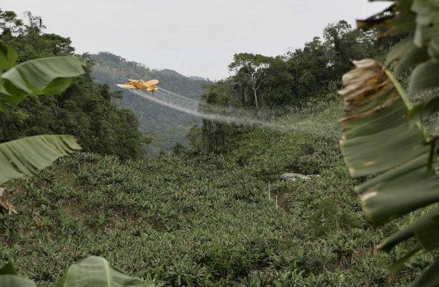 imagem de pulverização de plantação de bananas