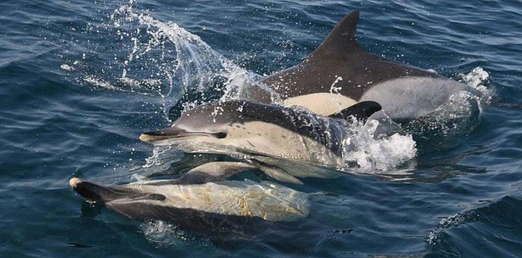 imagem de golfinhos à tona