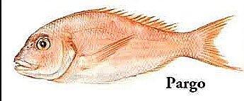 Ilustração de um peixe pargo