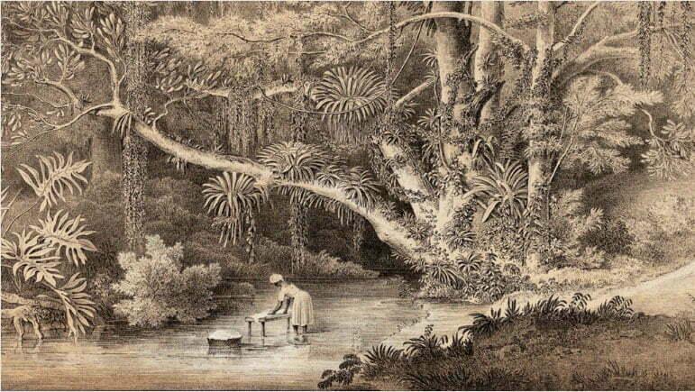 desenho das matas de Ubatuba em 1851 por Carl Friedrich Ph. von Martius.