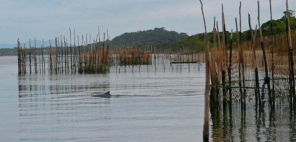 imagem de golfinhos e cercos de pesca