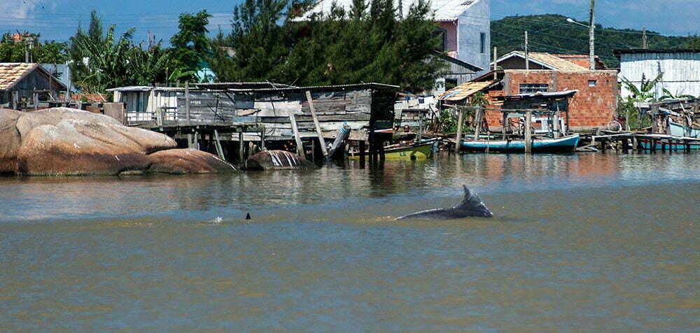 imagem de Golfinhos encurralando o cardume de peixes