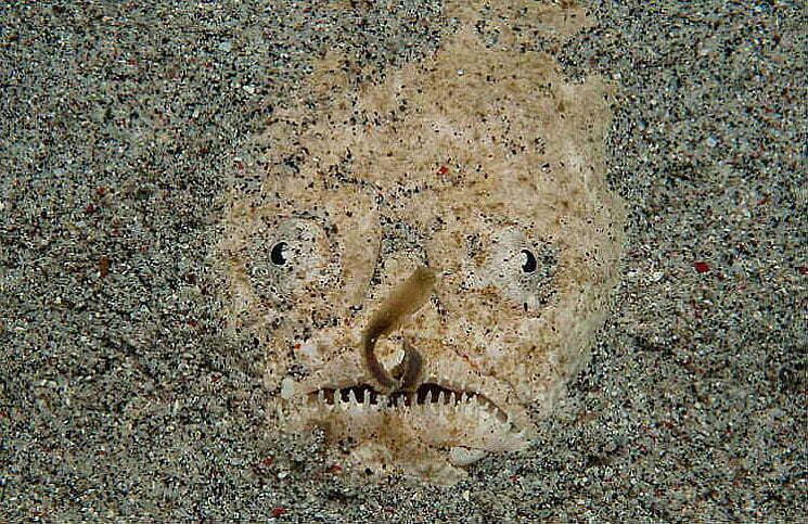 imagem do enterrado na areia