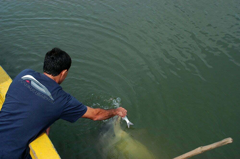 imagem de pescador e golfinho