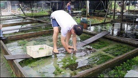 imagem de criação de algas