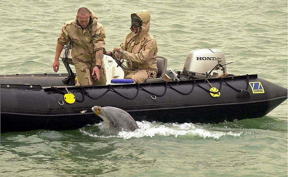imagem de soldados americanos e Golfinhos treinados para a guerra
