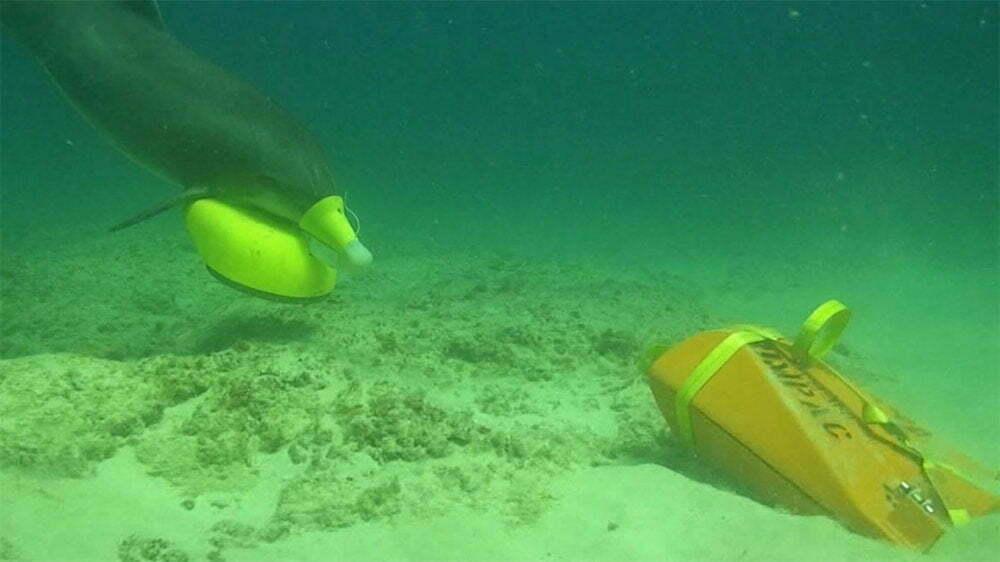 imagem de Golfinhos treinados para a guerra em ação submarina