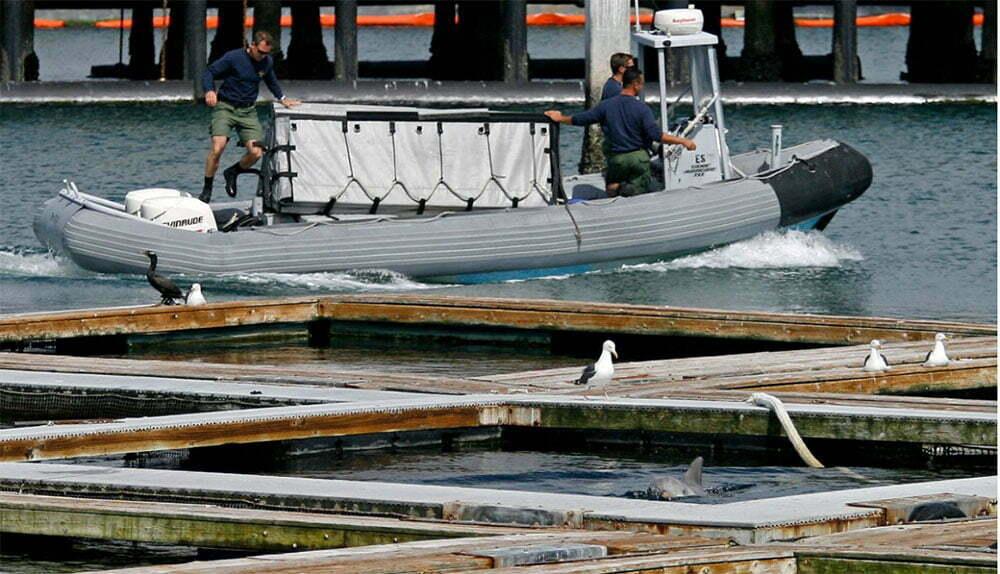 imagem de tanques da marinha onde estão Golfinhos treinados para a guerra