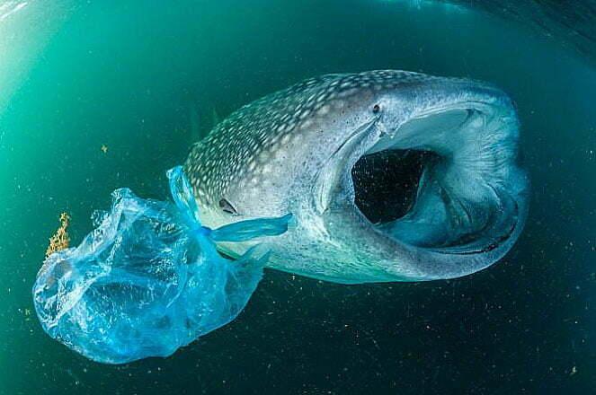 imagem de Baleia filtrando a água do mar.