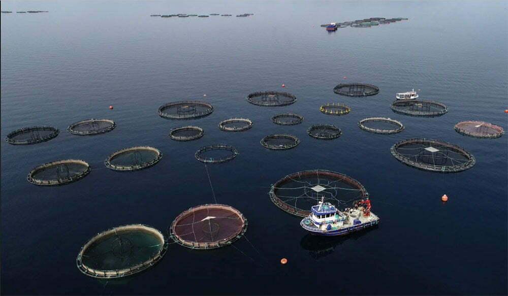 imagem de fazendas de peixes no litoral