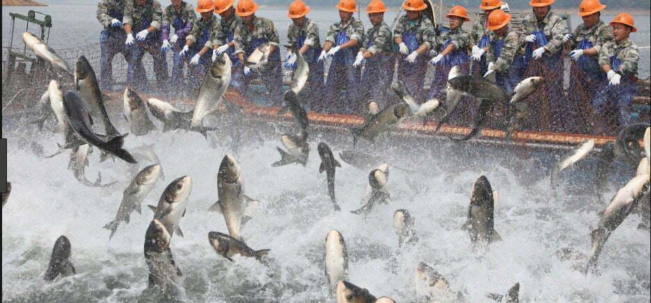 imagem de pescadores industriais
