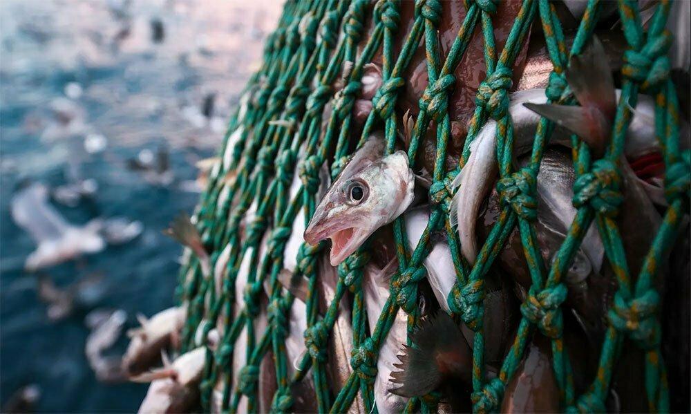 imagem de rede de peixes lotada