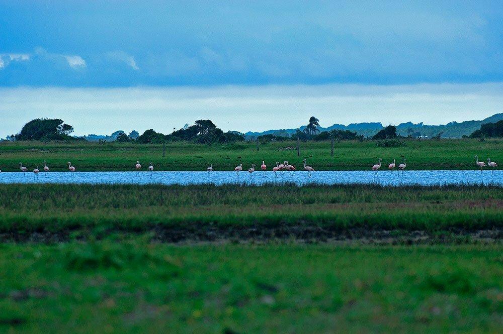 imagem de flamingos na lagoa do peixe, um dos Parques nacionais brasileiros