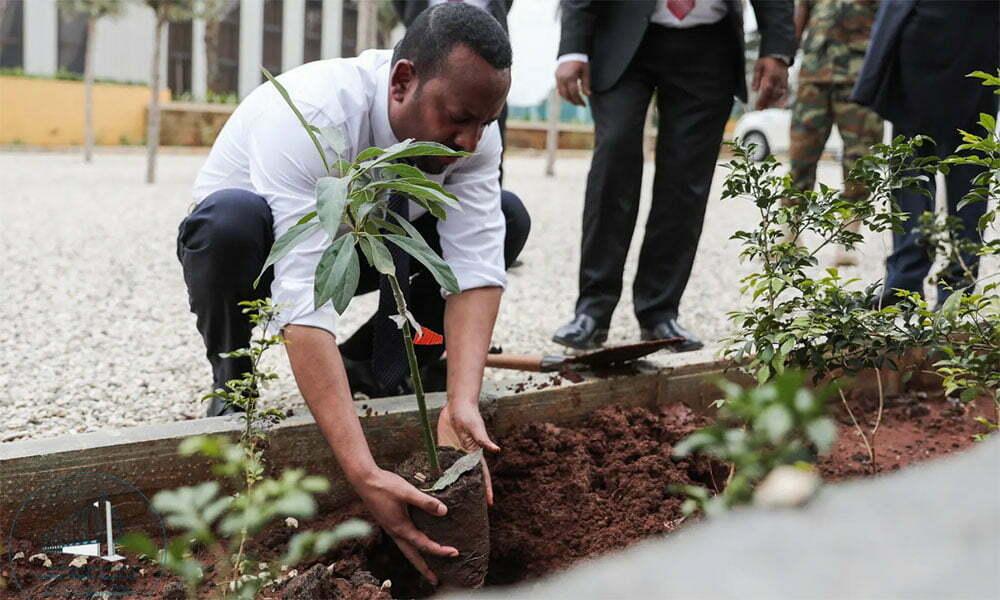 imagem de homem plantando árvores