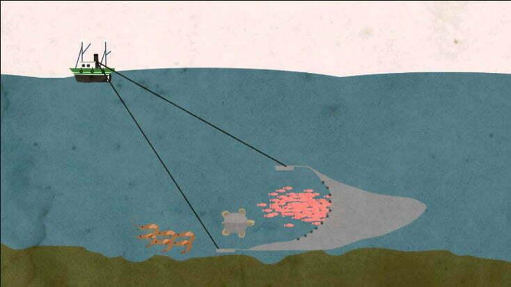 ilustração sobre pesca de arrasto