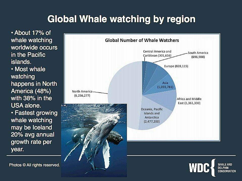 gráfico sobre avistagem de baleias no mundo