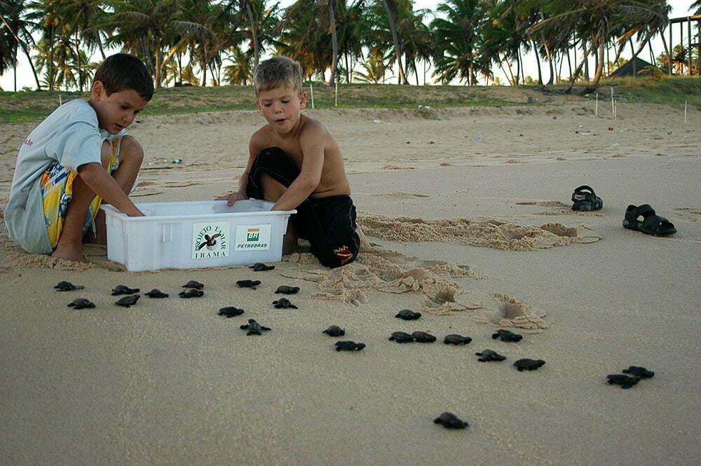 imagem de soltura de tartarugas na praia do Forte