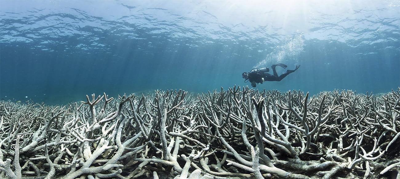 imagem de branqueamento de corais
