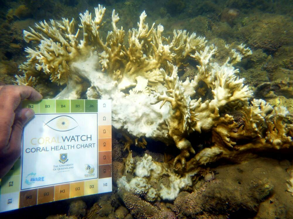imagem de colônia de corais-de-fogo