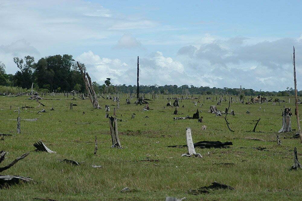 imagem de desmatamento no sul da Bahia