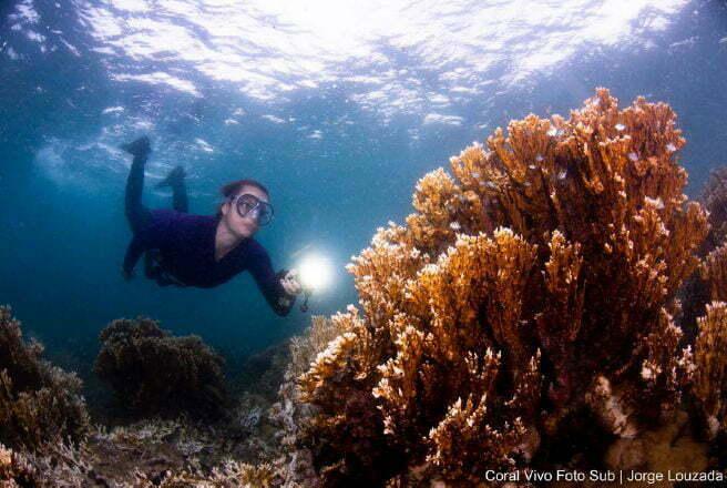 imagem de mergulhadora observando morte de corais