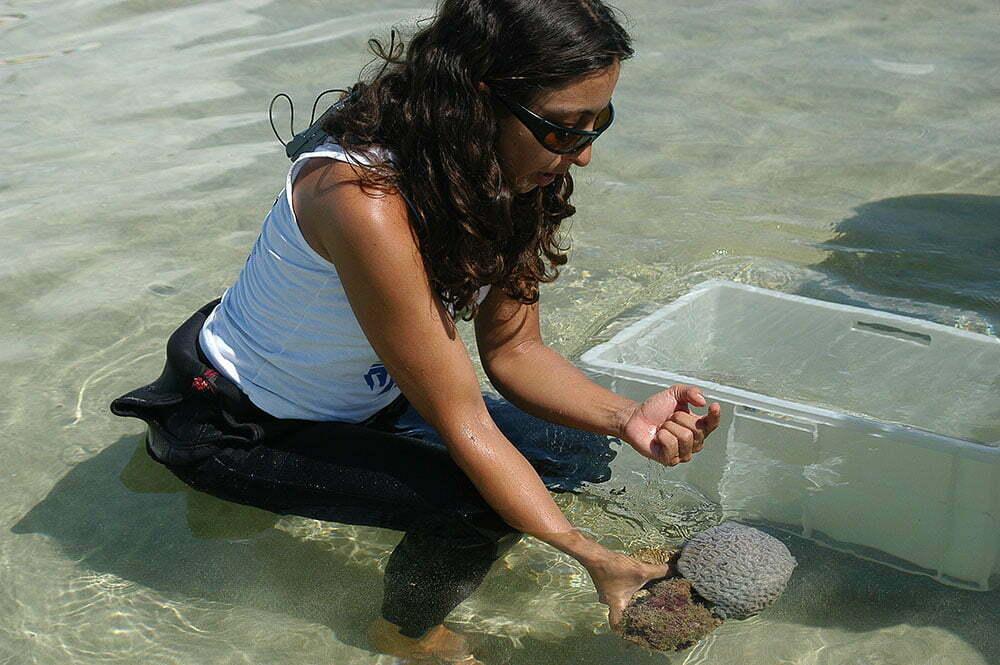 imagem de corais na mão de pesquisadora