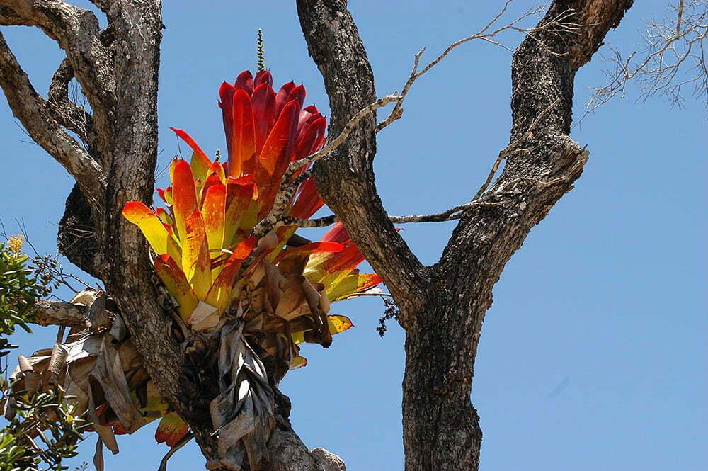 imagem de bromélia em tronco de árvore