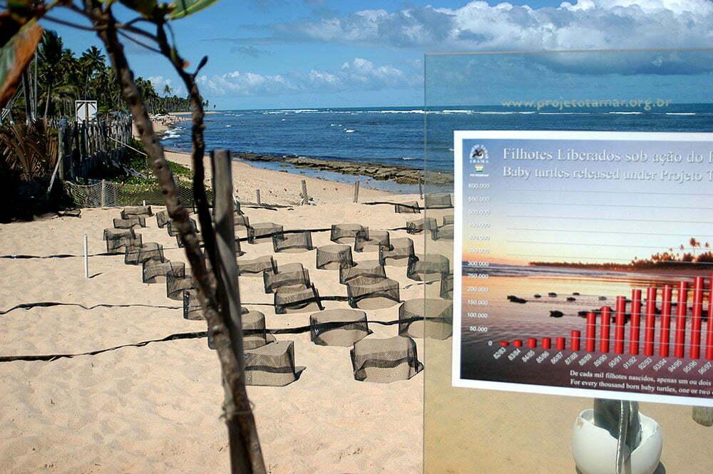 imagem de praia com desova de tartarugas, praia do forte