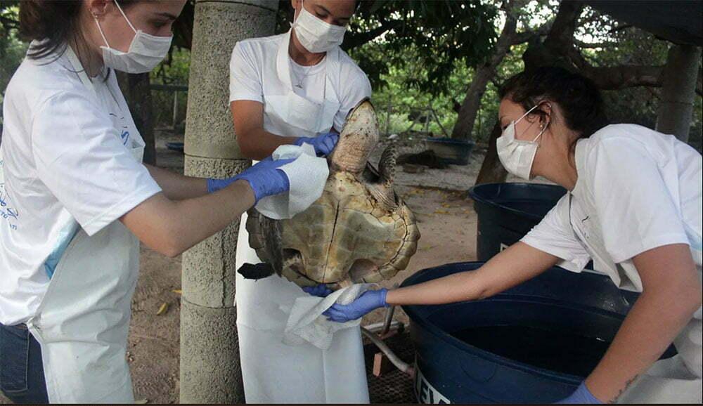 imagem de tartaruga sendo limpa