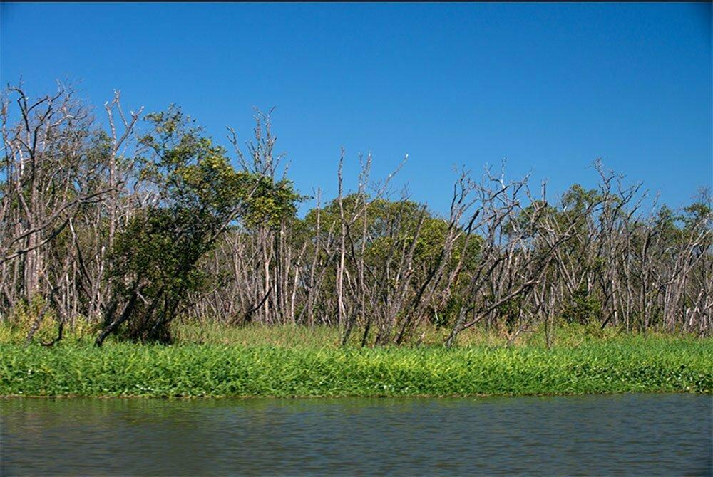 imagem de mangue de Iguape morto