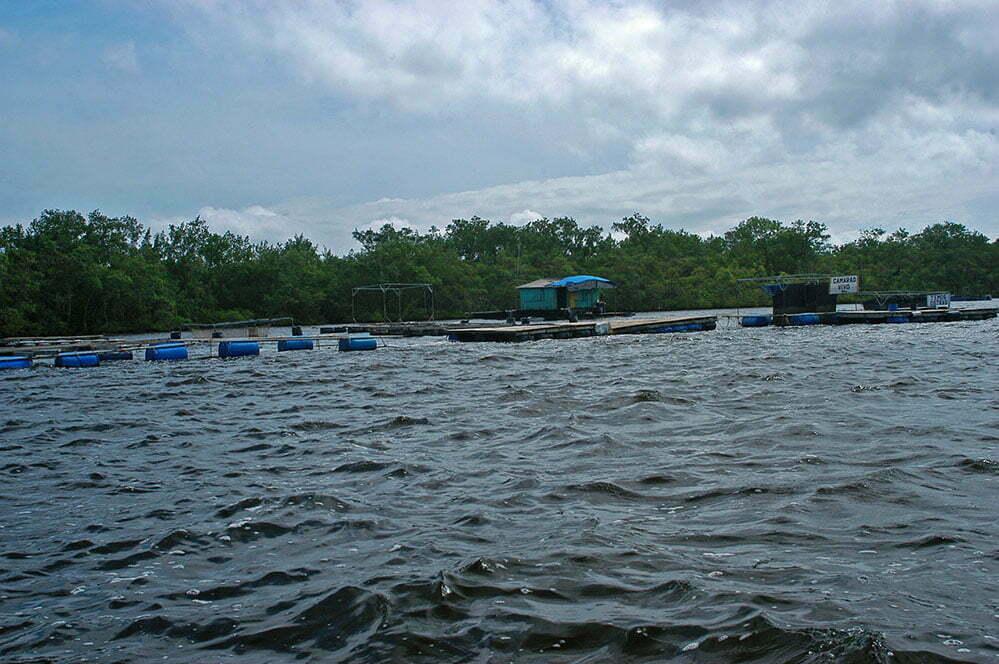 imagem de criação de ostras na baía de Guaratuba