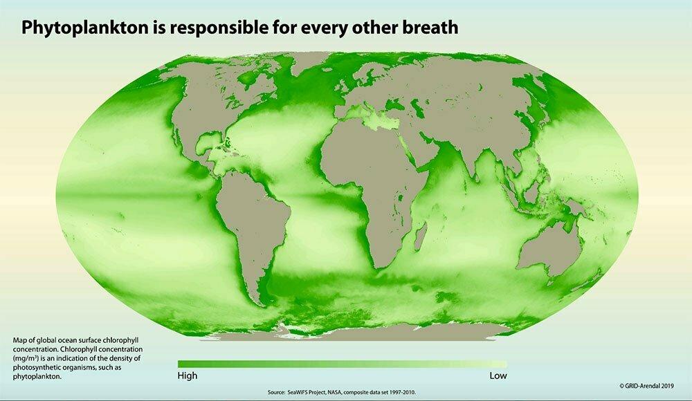 inforgrama mostra distribuição do fitoplâncton no globo