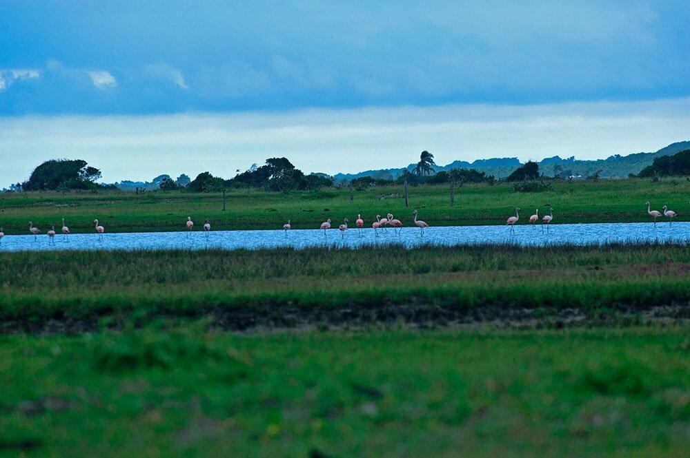 imagem de flamingos